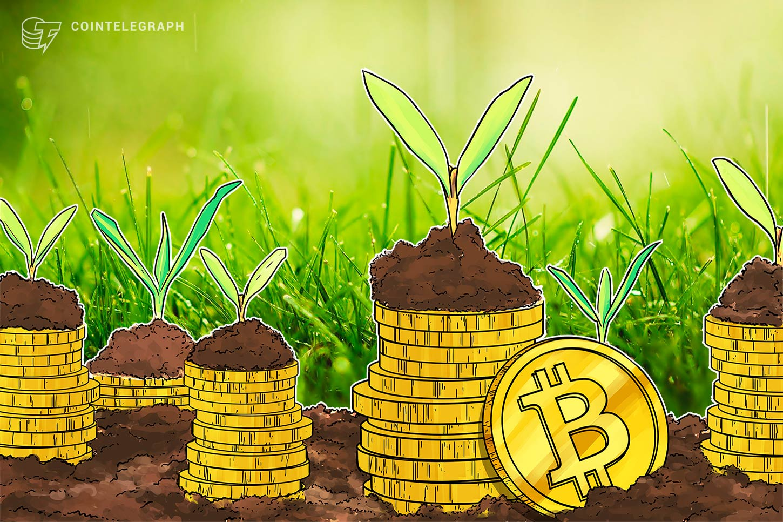 Gold drops to 7oz per BTC as Peter Schiff calls Bitcoin 'biggest bubble'